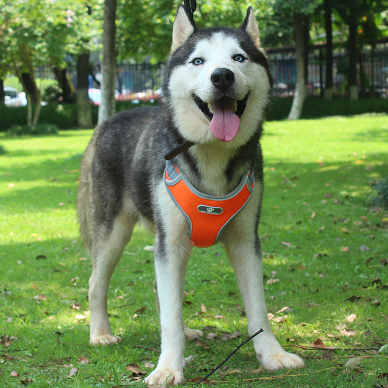 Coleira-reflexiva-para-cachorro-coleira-peitoral-ajust-vel-reflexiva-para-c-es-malha-respir-vel-para (1)